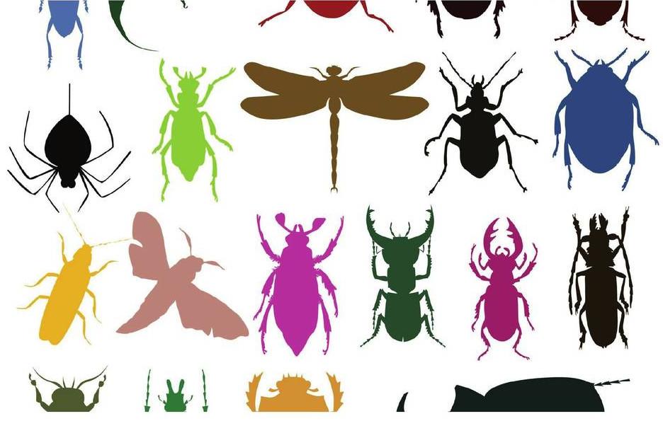 Métodos y Análisis de Biodiversidad con énfasis en grupos hiperdiversos